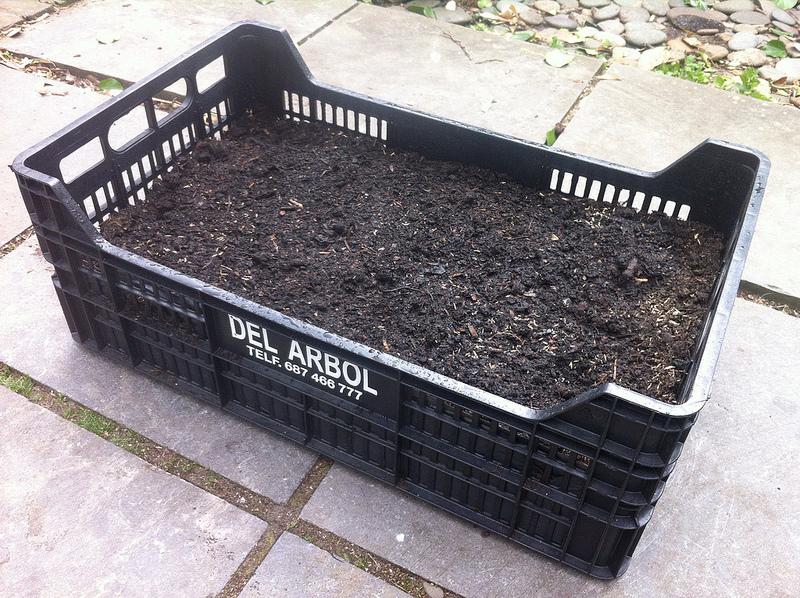 Mijn eigen EK veld gezaaid... #tuinierenmetzondertuin